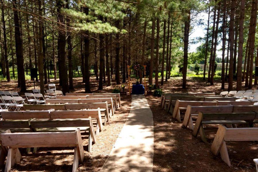 Wedding ceremony in the pines